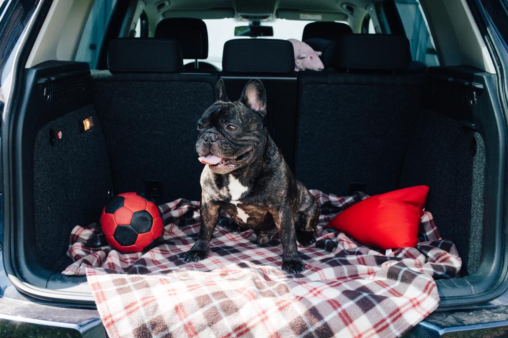 車内の汚れ防止に活躍するグッズをご紹介
