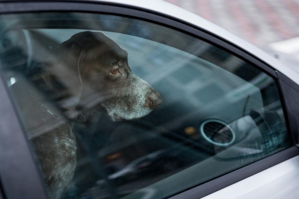 車内温度上昇による被害事例