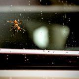 車内にアリが発生した場合の駆除方法や予防対策