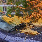 雨の日に車内がカビ臭い原因とその対策について徹底解説