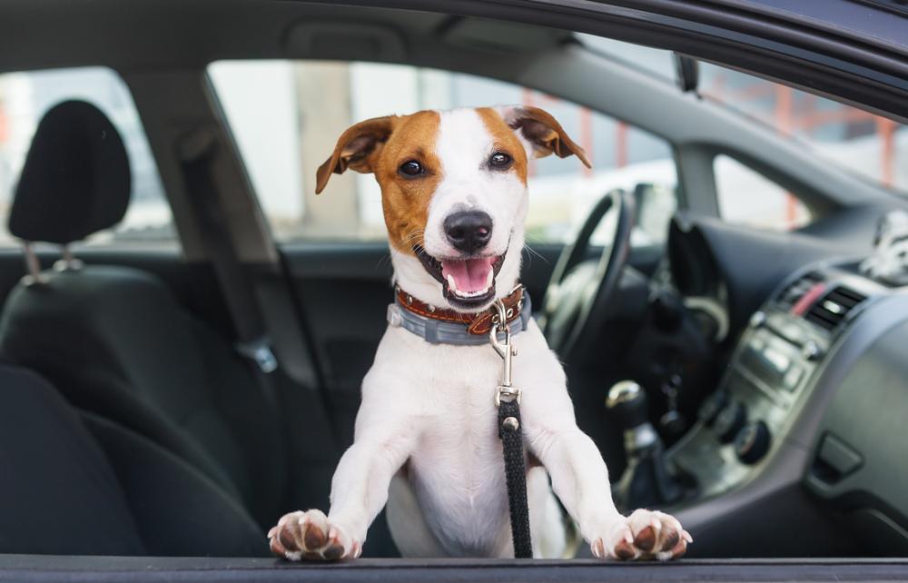 車内にご飯以外の臭いがある場合は要注意