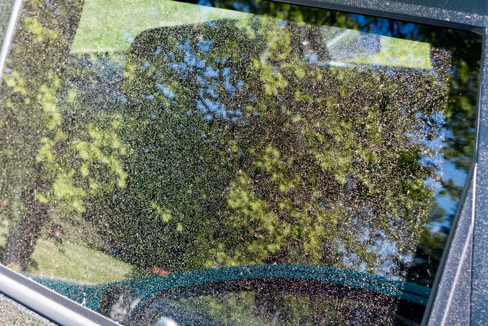 車についた花粉は放置厳禁!